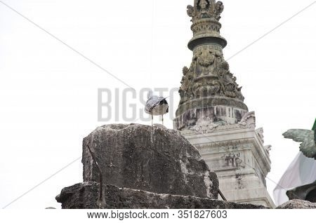 Wildlife And Architecture. Gull Sit On Architectural Monument. Sea Gull On Stone Monument. Historica