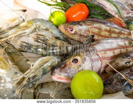 Closeup Image Of Fresh Raw Seafood Lying On The Counter At Restaurant