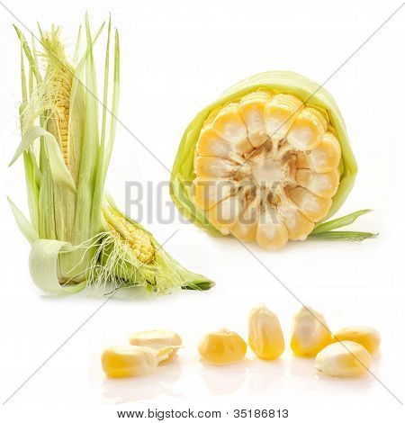 Collection of corn