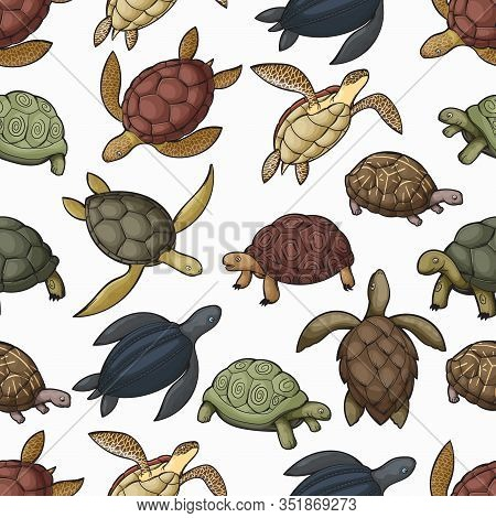 Turtle Animals Vector Seamless Pattern Of Sea Turtle, Tortoise And Terrapin Background. Water And La