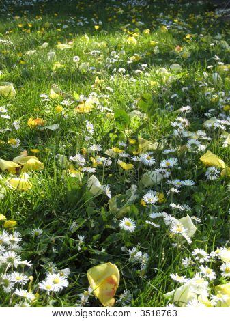 Kinsale Flowers
