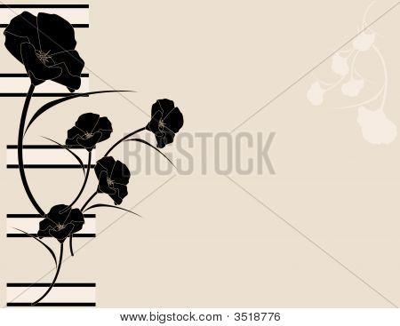 Black Pink Poppy Background
