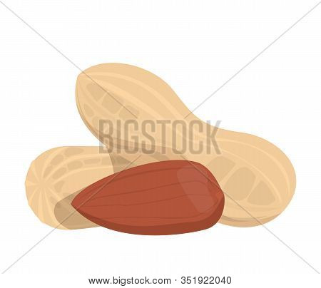 Peanuts In The Shell Vector Isolated. Fresh Vegetarian Food