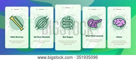 Organs Anatomical Onboarding Icons Set Vector. Stomach And Uterus, Spleen And Lungs, Heart And Kidne
