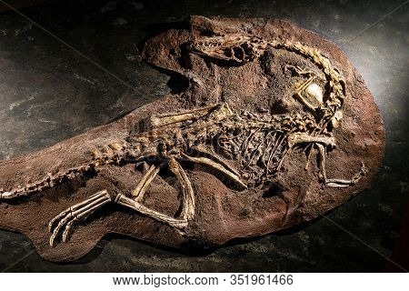 London, United Kingdom - 7 October 2019: Mysterious Fossil Of A Dinosaur Buried In The Sand Wall In
