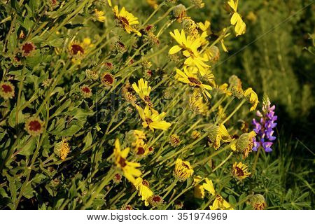 Lush Green Plants And Wildflowers During Spring Taken On A Field In Rural Windswept Grasslands