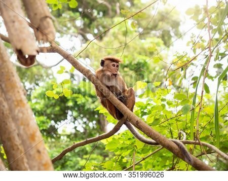 Closeup Image Of Funny Monkey Sitting On The Tree Branch At Jungle Forest