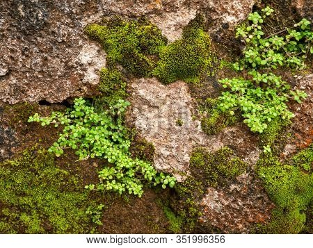 Closeup Image Of Old Rocks Overgrown With Moss
