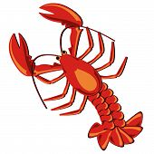 Seafood. Shellfish. Lobster illustration isolated over white. poster