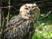 The night bird – an owl sits on a tree branch a summer sunny day poster