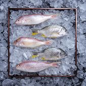 Raw fish shot on a tray over ice in the studio. poster