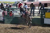 saddle bronc riding poster