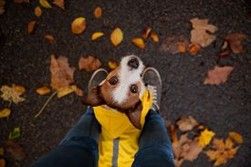 Little Terrier At The Feet. Jack Sat In A Yellow Raincoat In Nature. Dog Training. Man And Pet. Ani,