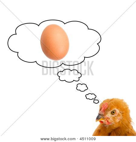 Brown hen thinking about having a egg on a white background poster