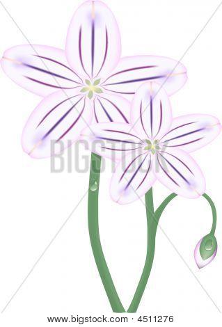 Spring Purple Flowers Vector