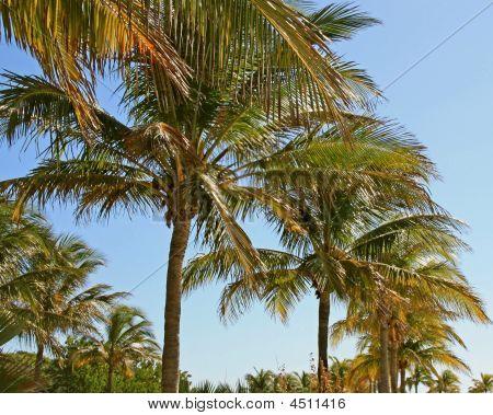 Palm Signal
