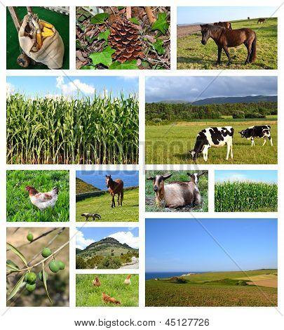 Collage of rural landscapes