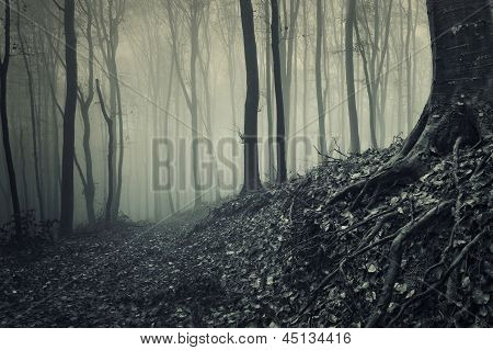 Dark woods with thick fog in autumn