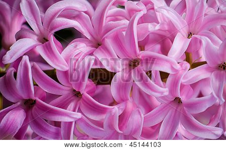 Pretty Pink Flowers