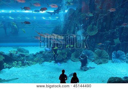 DUBAI, UNITED ARAB EMIRATES - MARCH 21: View of the aquarium in Dubai Mall shopping center in Dubai, on March 21, 2011. The largest indoor aquarium in the world, length of 50 meters.