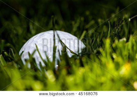 Golf Ball Hiding
