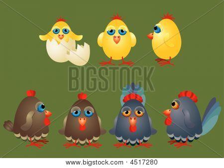 Eggs Chicken Hens Cock