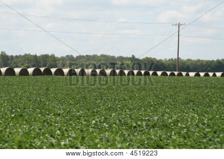 Row Of Round Bales