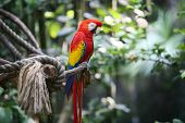 A colorful macaw parrot sleeping on branch in nature poster