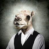 Portrait of a funny camel in a business suit on a gray background. collage poster