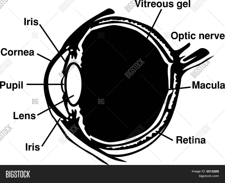 Eye diagram vector photo free trial bigstock eye diagram ccuart Choice Image