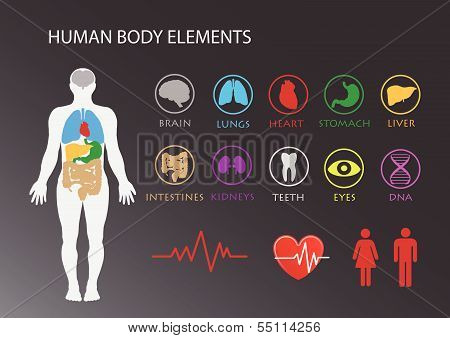 Human Body With Organs Icons