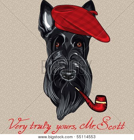 hipster dog Scottish Terrier breed in red beret with a pipe poster