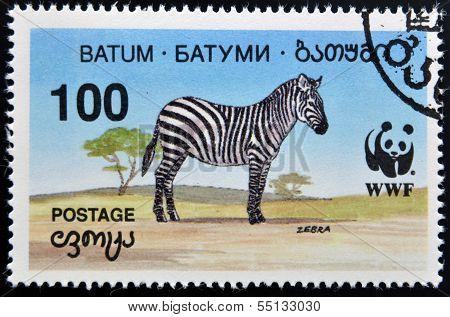 A stamp printed in Batumi shows zebra