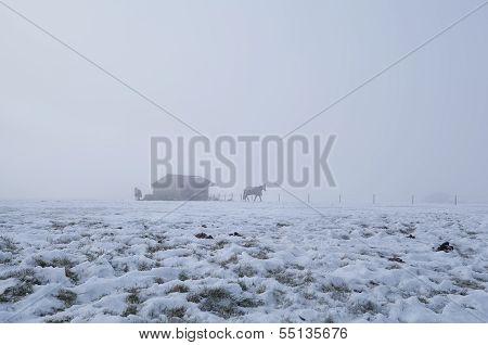 horses on winter pasture in dense fog Holland poster