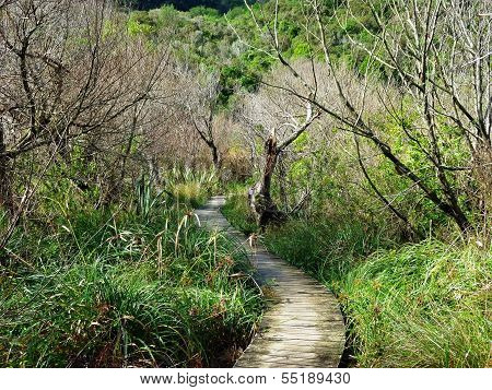 Wooden Hiking Path Through Bushes And Trees