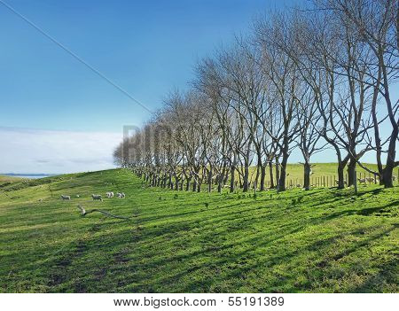 Line Of Bald Trees On Meadows