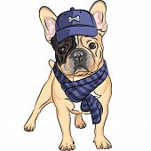 hipster dog French Bulldog breed in a blue cap and scarf poster