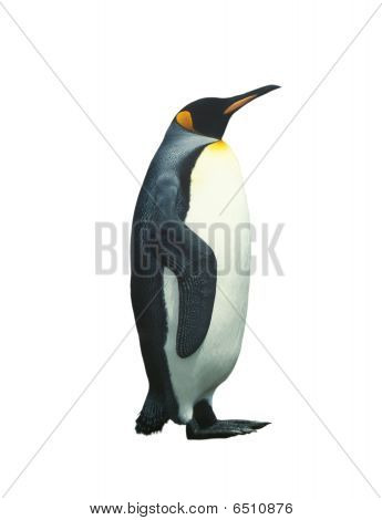 Isolated Emperor Penguin With Clipping Path