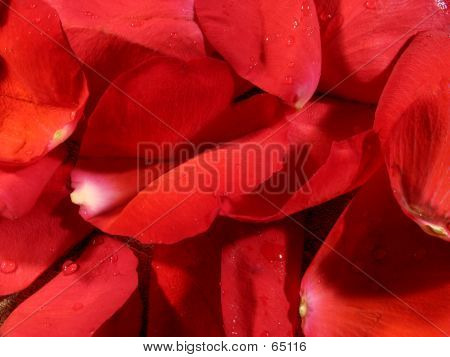 Red Petal Background