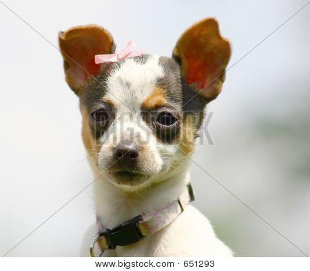 Cute Pup 2