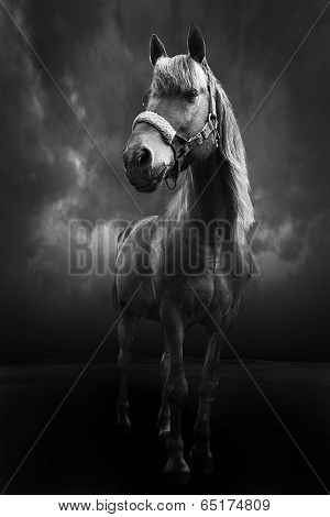 Brown Horse Standing Bw