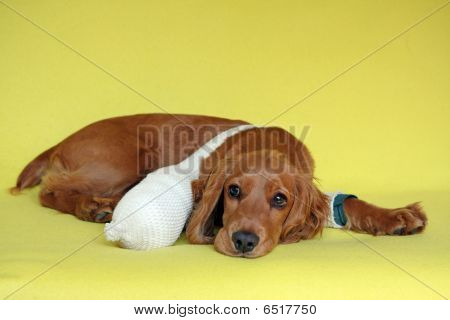 sick young dog