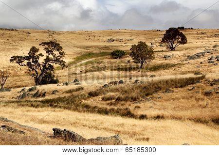 Australian Open Countrylandscape