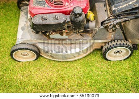 Cutting Green Grass In Yard With Lawnmower.
