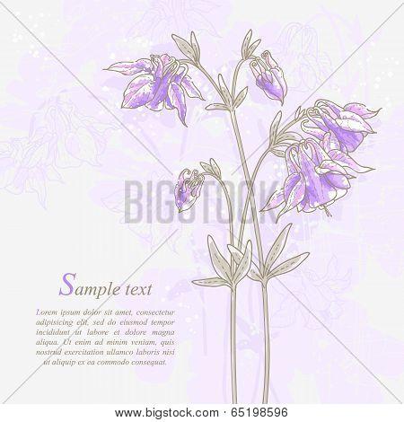 Romantic background with violet aquilegia