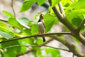 small tropical bird with orange beak with a raised head poster