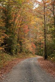 Fall Gravel Road