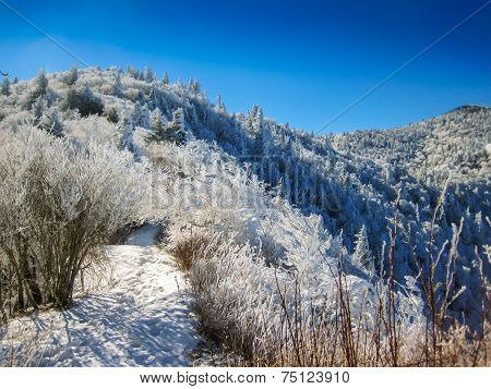 Snow Covered Mountain Trail