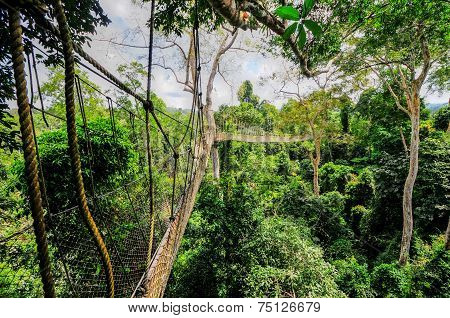 Canopy Walkway in Kakum National Park. A 375 square km national park located in the Central Region of Ghana. Kakum National Park has a long series of hanging bridges at the forest canopy level. poster