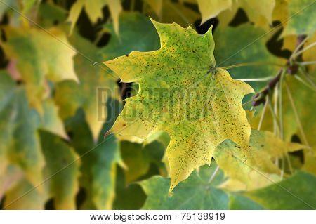 Green and yellow leaves fall foliage
